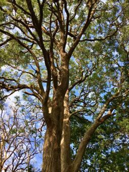 Karen Newkirks Tree